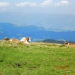 Forst 2012 358
